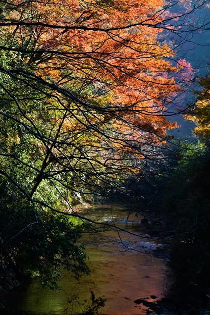 雨上がりの紅葉 (4)