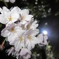 三丁目の夜桜