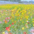 Photos: 【蔵出し】 お花畑