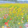 【蔵出し】 お花畑