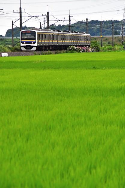 六月の成田線