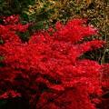 伊香保温泉の紅葉2020 (1)
