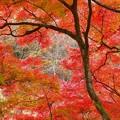 伊香保温泉の紅葉2020 (2)