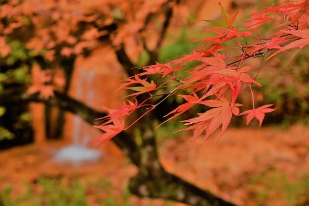 伊香保温泉の紅葉2020 (3)