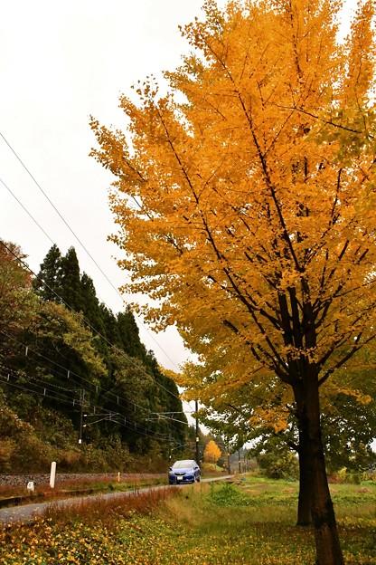 線路端の秋(1)