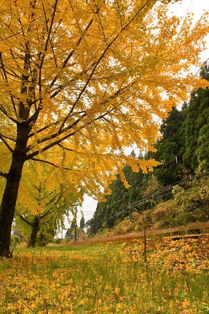 線路端の秋(2)