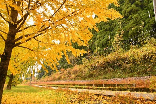 線路端の秋(3)