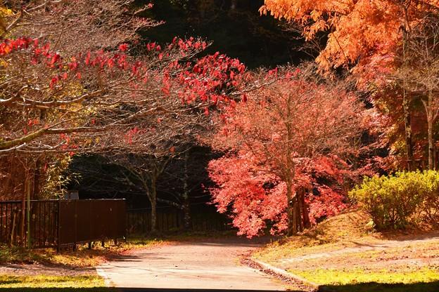亀山湖2020秋 (1)