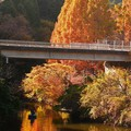 Photos: 亀山湖2020秋 (2)