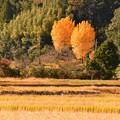 Photos: 二本の木