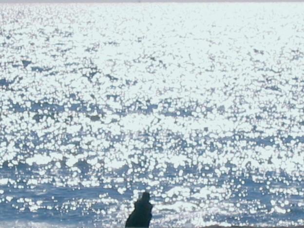 光る海とσ( ̄∇ ̄;)変なオヤジ