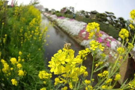ハチミツ収集中