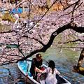 Photos: 恋の季節