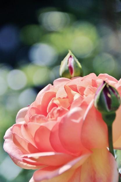 Photos: 愛の誓い