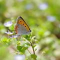 写真: 野の花と・・ ♪