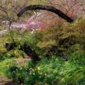 写真: 春の彩り