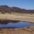 写真: 湿原の春