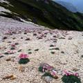 写真: 燕岳にて -2