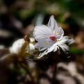 星野の春♪