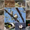 写真: 鳥達♪
