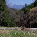 写真: 遥かな山