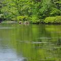 写真: 雲場池