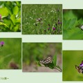 写真: 蝶集う