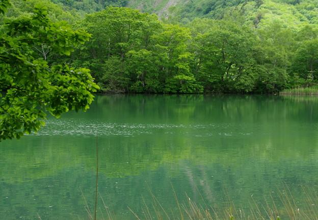 丸池  -1