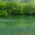 写真: 丸池  -1