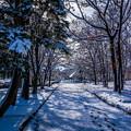 写真: 雪景色