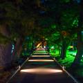 写真: 三保松原 神の道