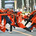 写真: 朝霞なるこ遊和会_彩夏祭2008_27