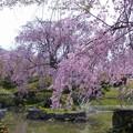東谷山フルーツパーク (5)