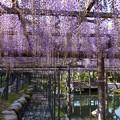 天王川公園 (2)