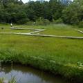 吉賀池湿地 (1)