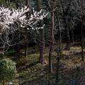 薬草園 (3)