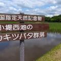 小堤西池 (1)
