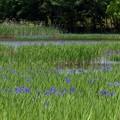 小堤西池 (3)