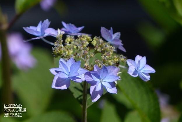 七段花 (2)