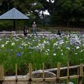 鶴舞公園 (1)