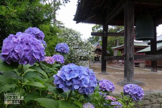 写真: 稲沢あじさいまつり (4)