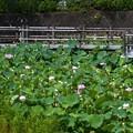 潮見坂平和公園 (1)