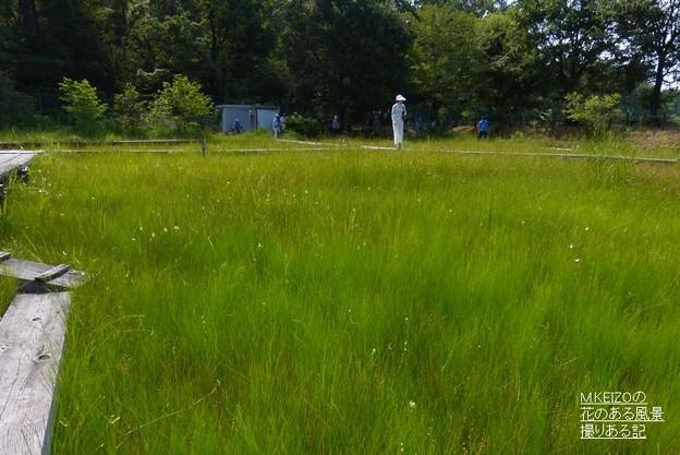 吉賀池湿地風景 (2)