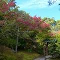 白鳥庭園 (3)