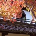 妙興寺 (56)