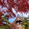 妙興寺 (57)