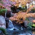 白鳥庭園 (2)
