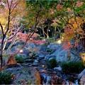 白鳥庭園 (4)