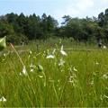 吉賀池湿地 (24)