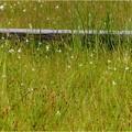 吉賀池湿地 (2)